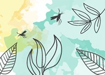 Apaisyl® Moustiques, des produits anti-moustiques efficaces